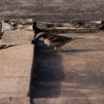 Sítio - Pássaros